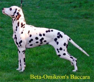 Beta-Omikrons-Baccara