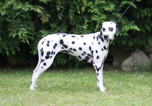 01_April with conntless spots